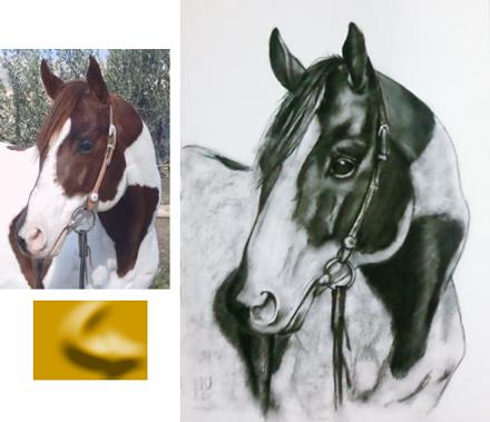 Ritratti e quadri di cavalli su commissione la tua opera - Avere un cavallo ...